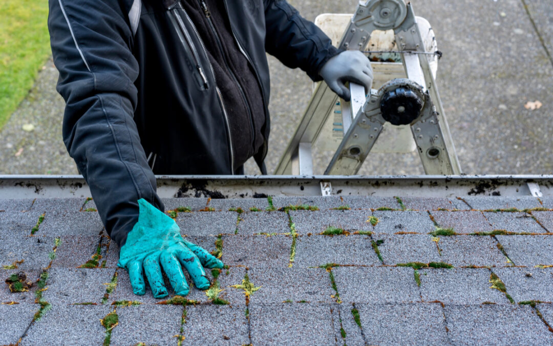 Know What To Look For When Inspecting Your Roof
