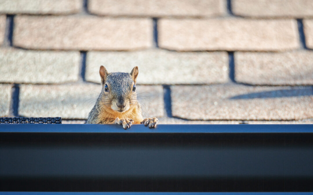 Pests That Pose A Threat To Your Roof's Integrity